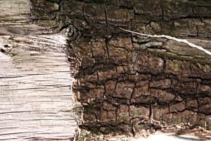 stockvault-wood-closeup97557